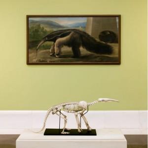 Historia Natural, en el Museo del Prado